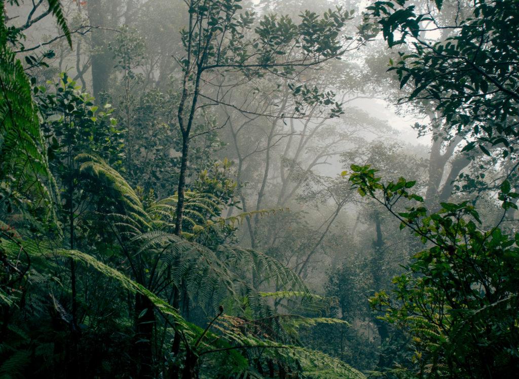 Alle Sechs Stunden Wird Regenwald In Der Flache Der Stadt