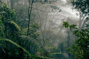 Alle sechs Stunden wird Regenwald in der Fläche der Stadt Zürich abgeholzt