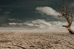Wenn die Wüste wächst