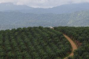 Höherer Palmölverbrauch durch Freihandelsabkommen befürchtet