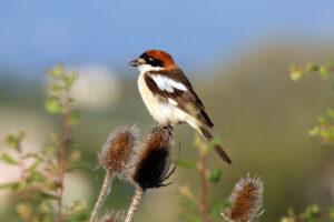 Intensive Landwirtschaft bedroht Vogelarten
