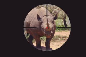 Nashörner weiterhin vom Aussterben bedroht